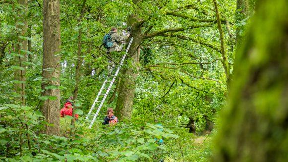 Dem Anbringen von Fledermauskästen folgt unbedingt eine intensive Betreuung. Foto: Christian Giese